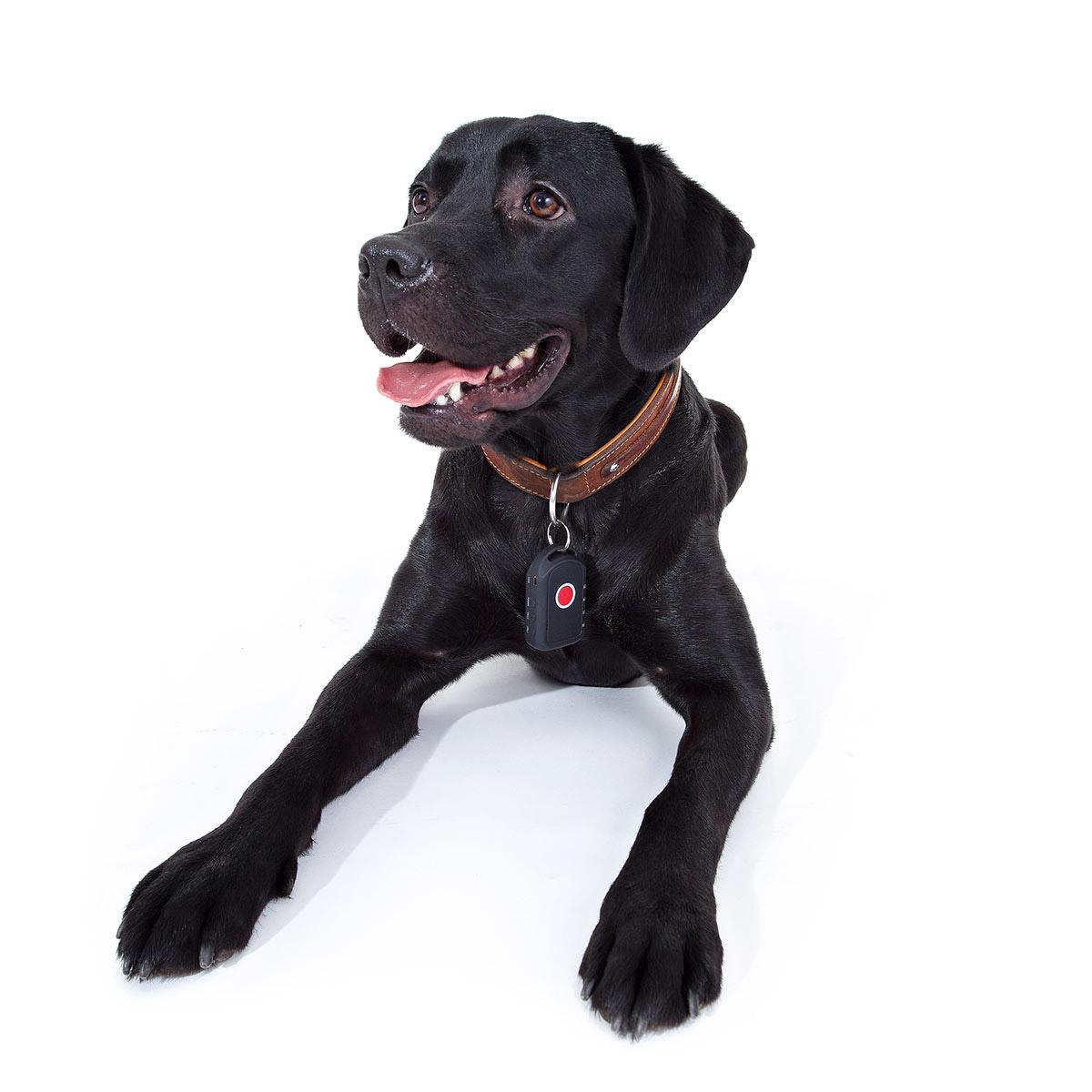 Dank B�rohund Lilly entwickelte die MYFAIRDEAL Onlinestores GmbH einen innovativen GPS-Sender f�r Hunde.